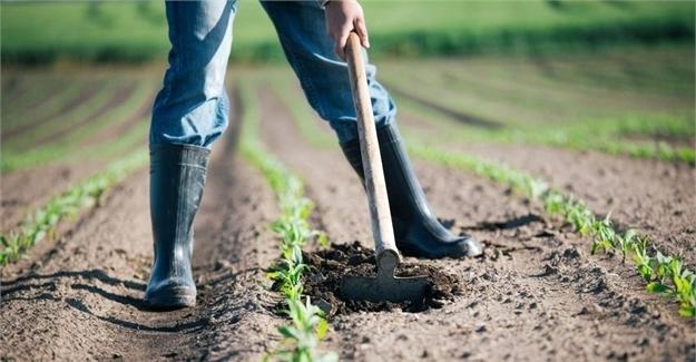 چکمه کشاورز